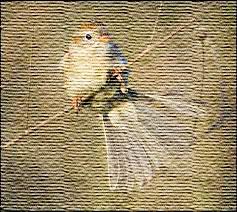 grasp sparrow's-tail