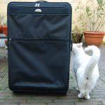dingo-met-koffer